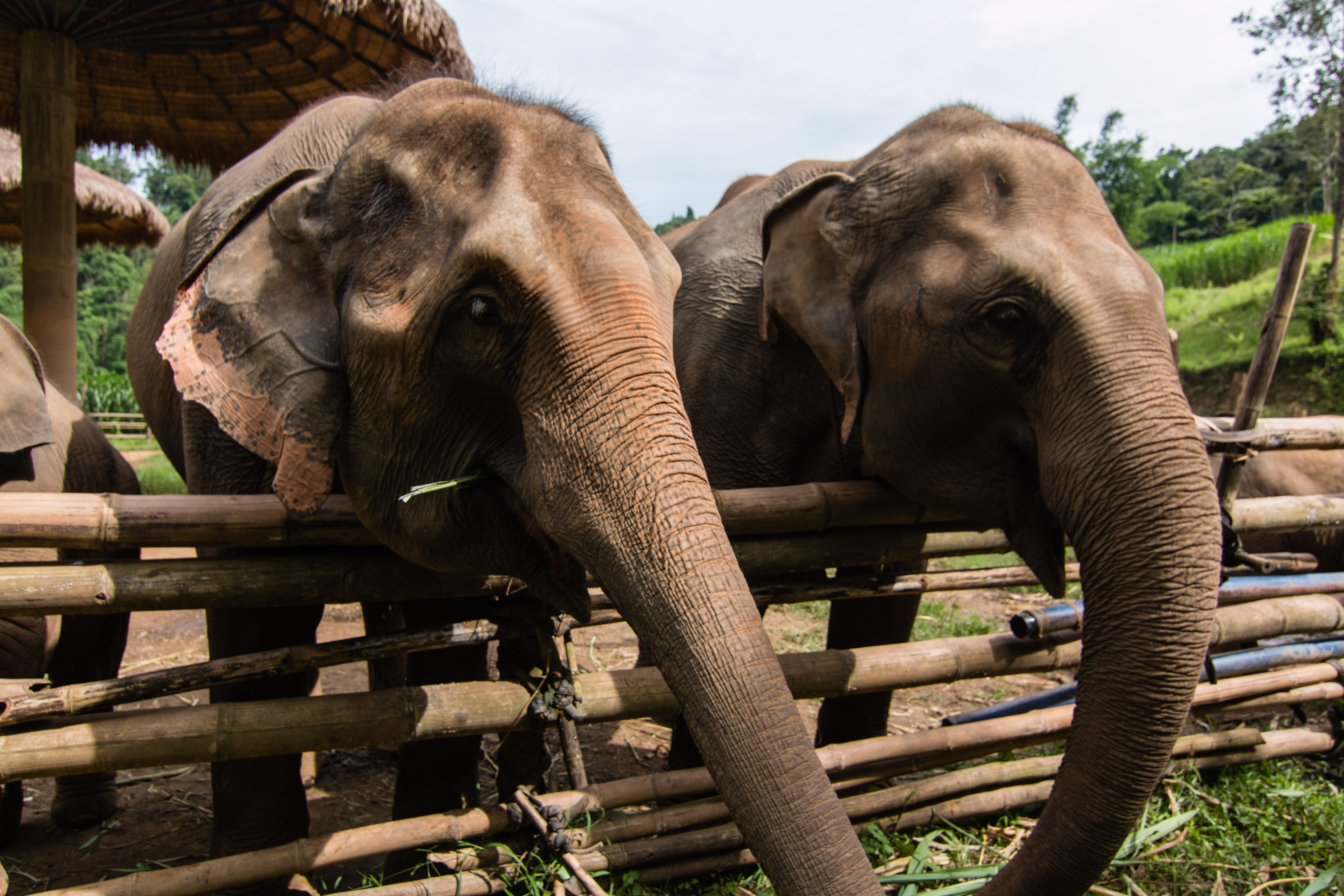 Full Day Elephant Tour with Loolu Tours - Travel Review ...  Full Day Elepha...